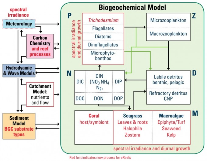 Biogeochemical Model